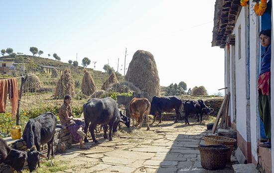 Home in Kumaon Hills