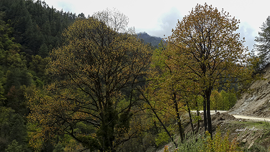 Trees at a bend at JSW National Park, Bhutan