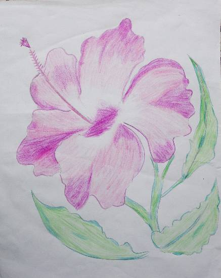 painting by Parinaz Hoshedar Davar - Hibiscus