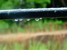 Photograph  by Janelle Jane Vedamony - Water drops