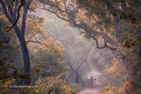 Misty Morning, Bharatpur, Karzok, photo by Hitendra Sinkar