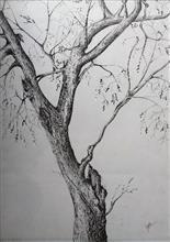 Khula Aasmaan - Plants Trees