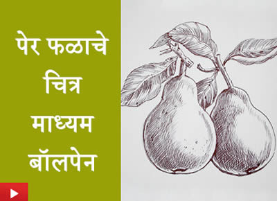 पेर फळाचे चित्र - माध्यम बॉलपेन | Ballpoint pen drawing - pear fruit